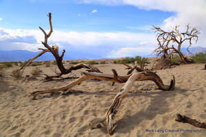 1_0_2564_1death_valley_april_2014_070.jpg